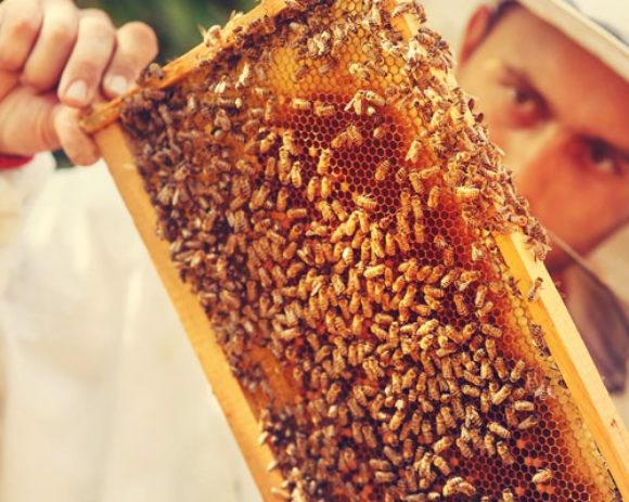 Производство башкирского меда